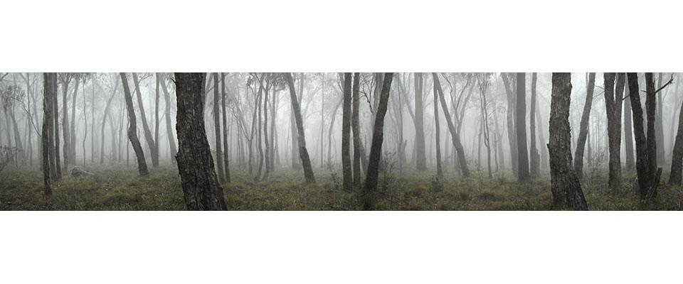herzog_trees_rosies